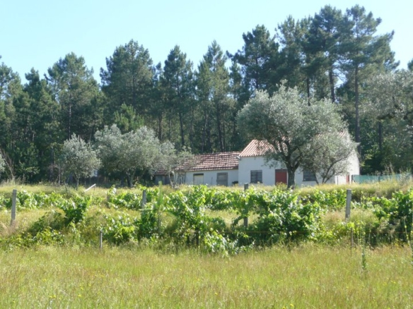 eco project, portugal, for sale